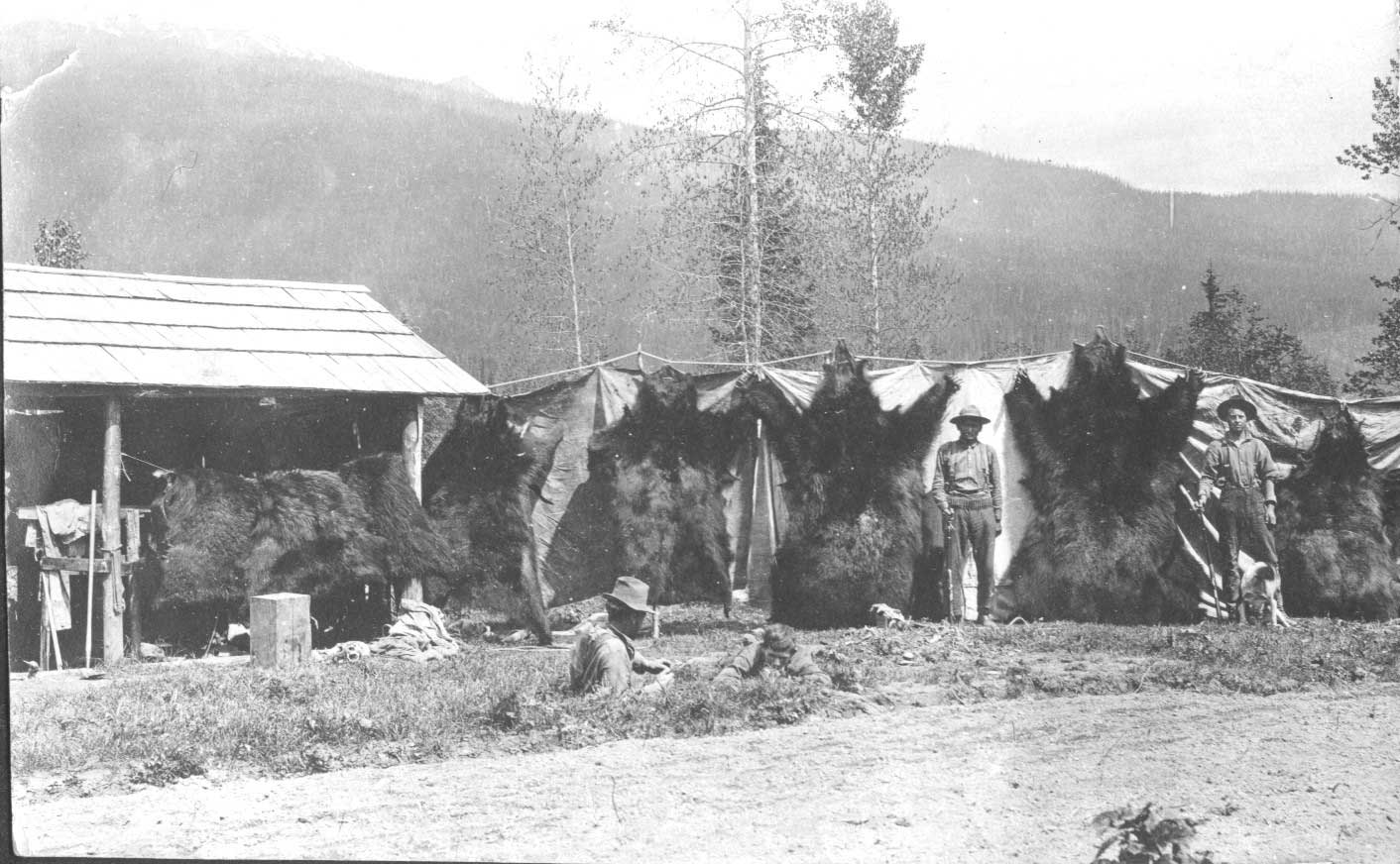 Grizzly Bear Hunting, Blue River BC - Historical